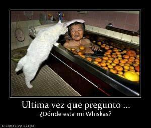donde está mi whiskas???? - meme