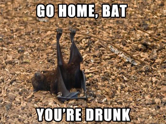 go home bat, you're drunk... - meme