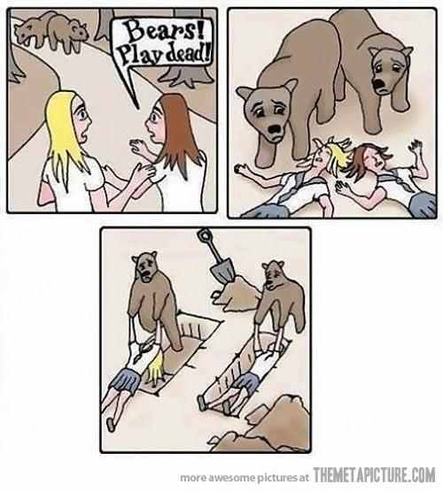 lol bears - meme