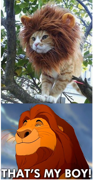 King lion :p - meme