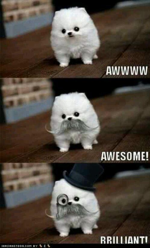 50cabb90db818 fancy dog meme by crazy_lil_fox ) memedroid